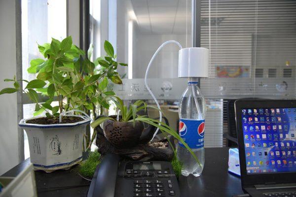 Покупка растений через интернет